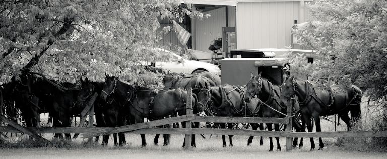 Pennsylvania Amish2539